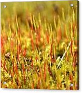 A Forest Of Moss II Acrylic Print