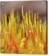 A Forest Of Moss Acrylic Print