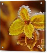 A Frosted Plant Acrylic Print