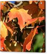 A Glimpse Of Autumn Color Acrylic Print
