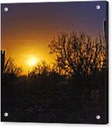 A Golden Saguaro Sunrise Acrylic Print
