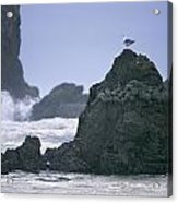 A Gull Sits On A Rock At Cannon Beach Acrylic Print