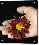 A Hand Holding A Red Rover Acrylic Print
