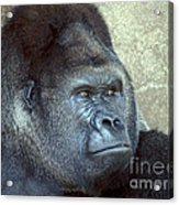 A Handsome Gent Acrylic Print