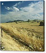 A Hay Field With Bales Sitting Acrylic Print