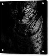 A Heart Of A Lion Acrylic Print
