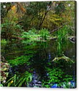A Hint Of Fall At Ichnetucknee Springs Acrylic Print