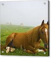 A Horse Sitting On The Grass In A Acrylic Print