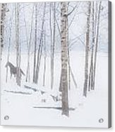 A Horse Stands Beside A Forest Of Bare Acrylic Print