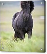 A Horse With Its Mane Blowing In The Acrylic Print