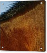 A Horses Neck And Mane, Seen So Close Acrylic Print