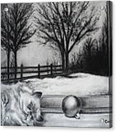 A Lazy Winter Day Acrylic Print