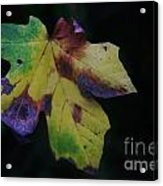 A Leaf Left Black And Blue  Acrylic Print