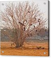 A Leafless Tree That Is Home To A Large Number Of Big Birds In The Middle Of A Ground Acrylic Print