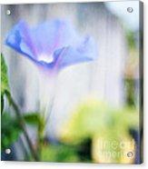 A Little Blue Acrylic Print by Darren Fisher