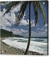 A Lone Palm Tree Grows From The Rocky Acrylic Print by Michael Melford