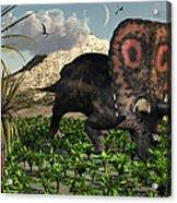 A Lone Torosaurus Dinosaur Feeding Acrylic Print