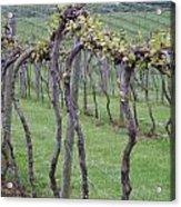A Love Of Wine Acrylic Print