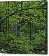 A Lush Green Eastern Woodland View.  An Acrylic Print