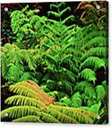 A Mass Of Ferns Acrylic Print