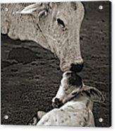 A Mother's Love Monochrome Acrylic Print