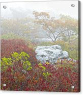 A Natural Garden At Dolly Sods Wilderness Area Acrylic Print