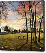 A New Day Begins Acrylic Print