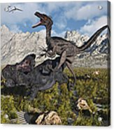 A Pack Of Velociraptors Attack A Lone Acrylic Print