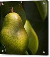A Pair Of Pear On A Tree Acrylic Print