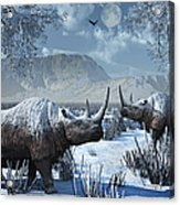 A Pair Of Woolly Rhinoceros In A Severe Acrylic Print