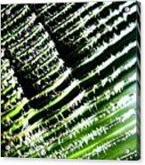 A Palmfrond Acrylic Print by Catherine Natalia  Roche
