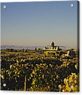 A Panoramic View Of A Vineyard Acrylic Print