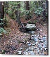 A Peaceful Redwood Creek On Mt Tamalpais Acrylic Print