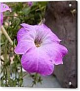 A Photo Of A Purple Trumpet Shaped Flower Acrylic Print