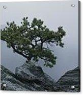 A Pine Tree Clings To A Rocky Ridge Acrylic Print