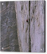 A Rock Climber Clings To An Overhang Acrylic Print