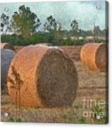 A Roll In The Hay Acrylic Print