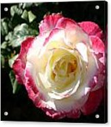 A Rose From Tyler Acrylic Print