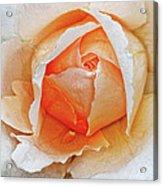 A Roses Tear Acrylic Print