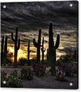 A Saguaro Sunrise  Acrylic Print