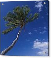 A Scenic View Of A Palm Tree Acrylic Print