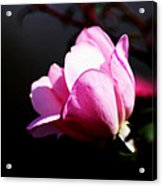 A Simple Rose Acrylic Print
