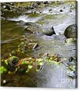 A Small Dam Of Golden Leaves  Acrylic Print