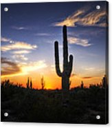 A Sonoran Sunset  Acrylic Print