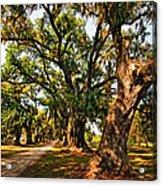 A Southern Stroll Acrylic Print by Steve Harrington