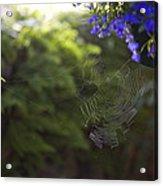 A Spider Web In A Garden Acrylic Print