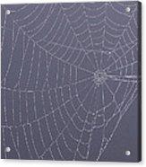 A Spider's Handiwork Acrylic Print