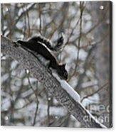 A Squirrel Snow Cone Acrylic Print