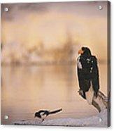 A Stellers Sea Eagle Perched On A Log Acrylic Print