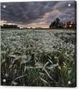 A Summer Sunrise With Storm Clouds Acrylic Print